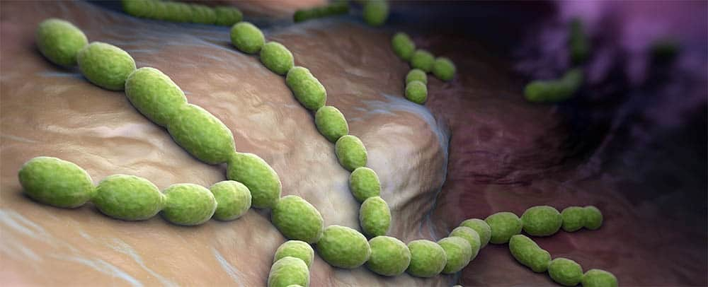 Cultural Characteristics of Streptococcus
