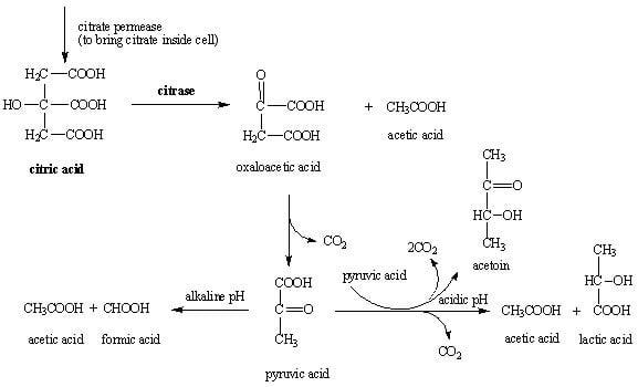 Principle of Citrate Utilization Test