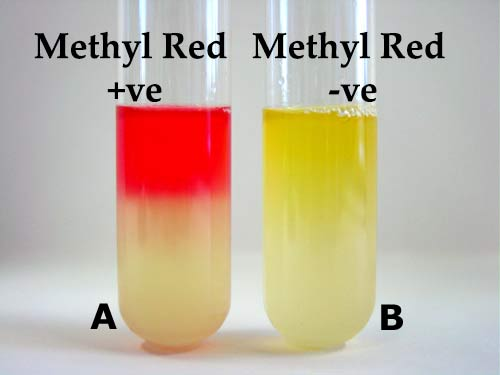 Methyl Red (MR) Test- Principle, Procedure and Result