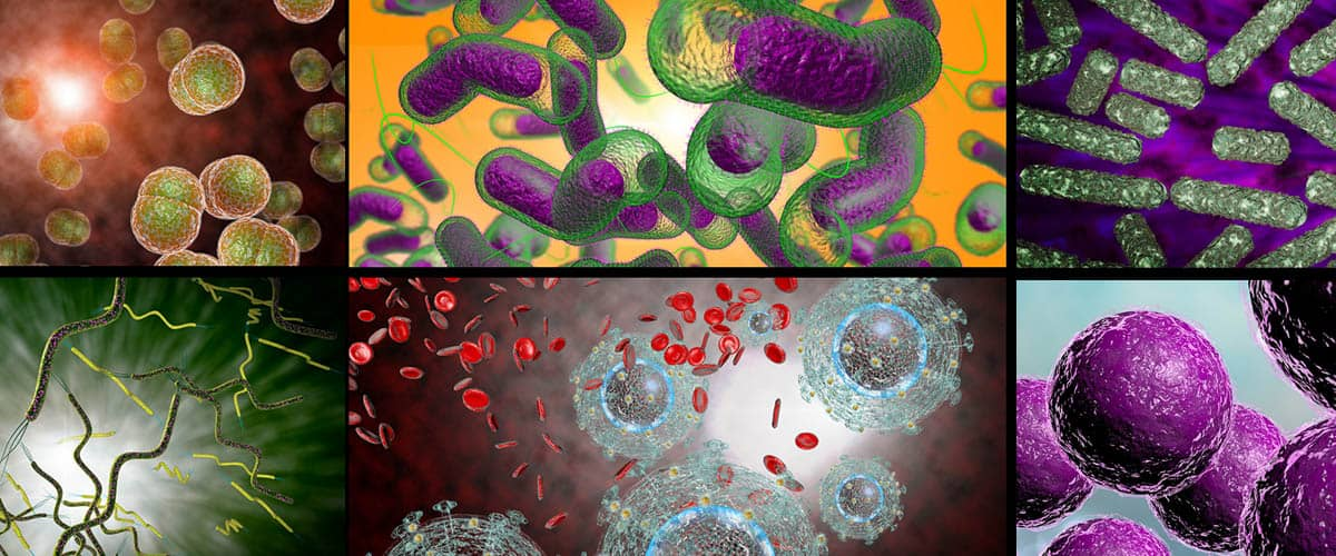 Viruses Bacteria and Other Microorganisms