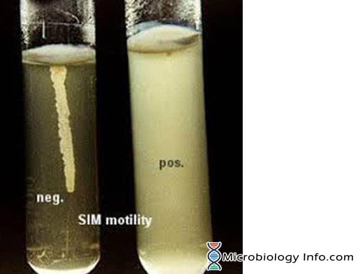 Motility Test